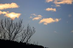 Shining clouds and tree branches in Pyrenees, France. Clouds lit by a sunset with branches in shadows in Pyrenees. Occitanie in south of France Royalty Free Stock Photos