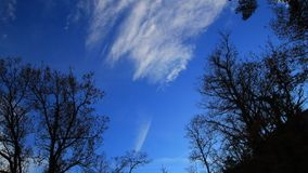 Clouds in motion with trees in Chinese shadow. Video filmed in timelapse in Pyrenees stock footage
