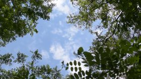 Clouds move in blue sky behind green tree branches stock video footage