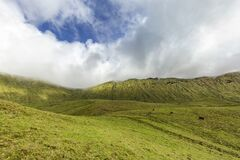 Glorious Corvo Cattle Pasture