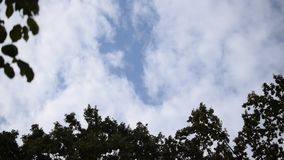 Clouds move over tops of trees in blue sky