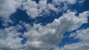 Clouds Move Smoothly in the Blue Sky. Timelapse. Sunny blue sky, white, and gray clouds. Beautiful clouds flying in the air. Time lapse. Atmospheric weather stock video footage