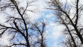 Clouds moving on a background of trees in the. The tops of the trees in spring, autumn, over which the moving clouds in the blue sky stock footage