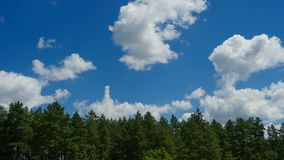 Clouds are Moving in the Blue Sky over the Trees. TimeLapse. Beautiful White fluffy clouds over blue sky soar in Time lapse stock footage
