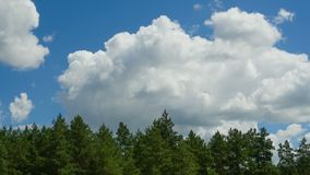 Clouds are Moving in the Blue Sky over the Trees. TimeLapse. Beautiful White fluffy clouds over blue sky soar in Time lapse stock video footage