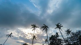 Clouds moving over palm trees. Timelapse video of clouds moving over palm trees swaying in the wind against blue sky and sun stock video footage