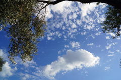 Clouds and Olive Branch Royalty Free Stock Photos