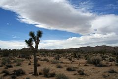 Clouds Over the Joshua Tree royalty free stock photography