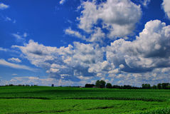 Clouds Over A Corn Field. Puffy cumulus clouds over a corn field and farm in the summer sun Stock Images