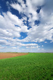 Clouds over a corn field Stock Photos