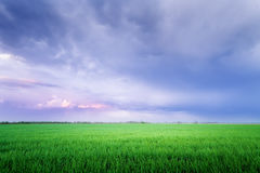 Clouds over the field / bright colorful picture spring evening u Stock Photography