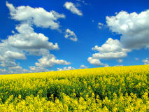 Clouds over the field of rape Royalty Free Stock Images