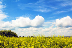 Clouds over the field. Royalty Free Stock Photography
