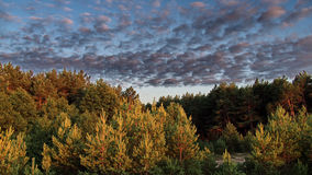 Clouds over forest Royalty Free Stock Images