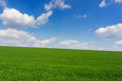 Clouds over green field of young wheat Royalty Free Stock Photo