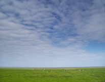 Clouds over green grass Royalty Free Stock Images
