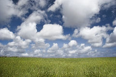 Clouds over a green landscape Stock Photography