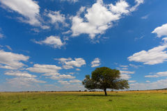 Clouds over green pastures Stock Photo