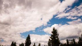 Clouds over montana treeline stock video footage