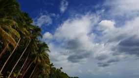 Clouds over palm trees long time lapse. A long time lapse video showing cumulus clouds moving and transforming over palm trees on San Juan beach, Siquijor Island stock footage