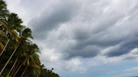 Clouds over Palm Trees 02 stock video footage