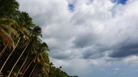 Clouds over palm trees stock video