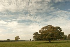 Clouds over parkland, Lincolnshire Royalty Free Stock Photos