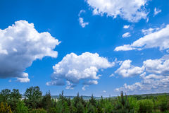 Clouds over pine trees Royalty Free Stock Photo