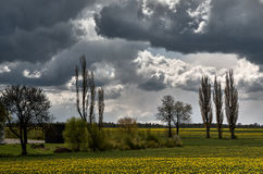 Clouds over rape field. Clouds over a field of yellow rape Stock Photo