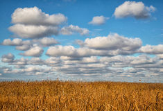 Clouds over the reeds. Ural Stock Image