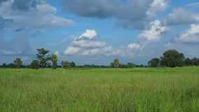 Clouds over rice field. In Thailand stock video footage