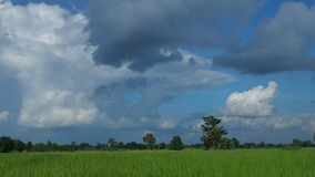 Clouds over rice field stock video
