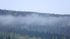 Clouds over tops of evergreen tall fir trees, time lapse. Clouds over tops of evergreen tall fir trees, summer morning fog cloud in mountain slope forest with stock video