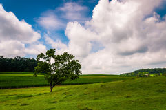 Clouds over tree in a field in Southern York County Stock Photo