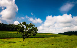 Clouds over tree in a field in Southern York County Stock Images