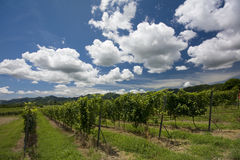 Clouds over vineyard Stock Image