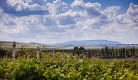 Clouds over vineyard Royalty Free Stock Photos