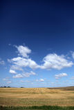Clouds over wheat field. Photo #1 Stock Photography