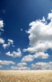 Clouds over wheat field. Photo #33 Royalty Free Stock Photography