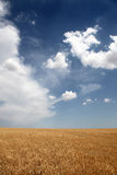 Clouds over wheat field. Photo #30 Royalty Free Stock Photography
