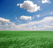 Clouds over wheat field. Royalty Free Stock Photos