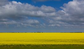 Clouds over wheat field Saskatchewan Stock Images
