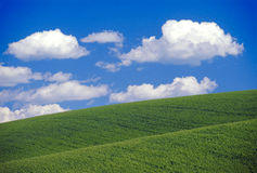 Clouds over wheat fields Stock Photo