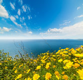 Clouds over yellow flowers by the sea Royalty Free Stock Photos