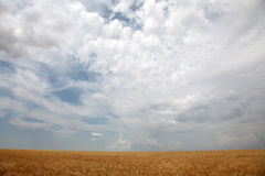 Clouds over yellow wheat field. Photo for background #9 Stock Photos