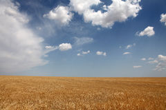Clouds over yellow wheat field. Photo for background #1 Stock Photography