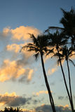 Clouds and Palm Trees at Sunset Royalty Free Stock Photography