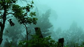 Clouds pass over mountains green hillside with trees in cloud scraps moving fog over trees mist. Clouds pass over mountains green hillside with trees in cloud stock video footage