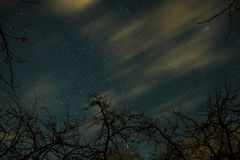 Clouds passing in the moon light by over a forest and on a night sky full of stars Royalty Free Stock Images