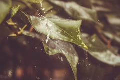 Clouds with rain water the plant and make streams. Rain Leaves Water Green Brooks Background Cloudiness Sadness Cold Nature Watering Planting stock images